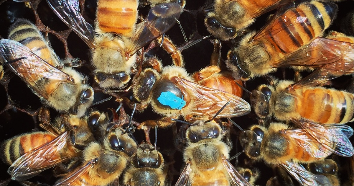 6 THINGS YOU DIDN'T KNOW ABOUT QUEEN BEES